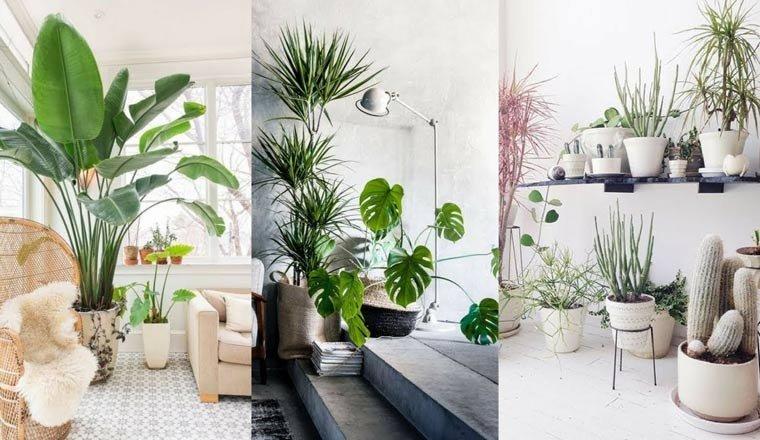 Các mẹo đơn giản để mang vẻ đẹp thiên nhiên vào ngôi nhà của bạn