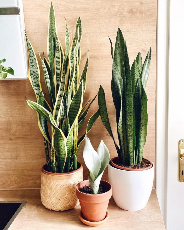 Các loại cây không cần chăm sóc nhiều và sinh động cho căn phòng của bạn.