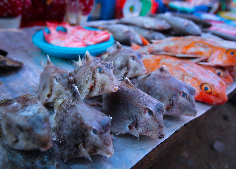 … nơi cung cấp các loại hải sản tươi ngon để du khách có thể mua về làm quà hoặc có thể nhờ người dân chế biến để thưởng thức tại chỗ.