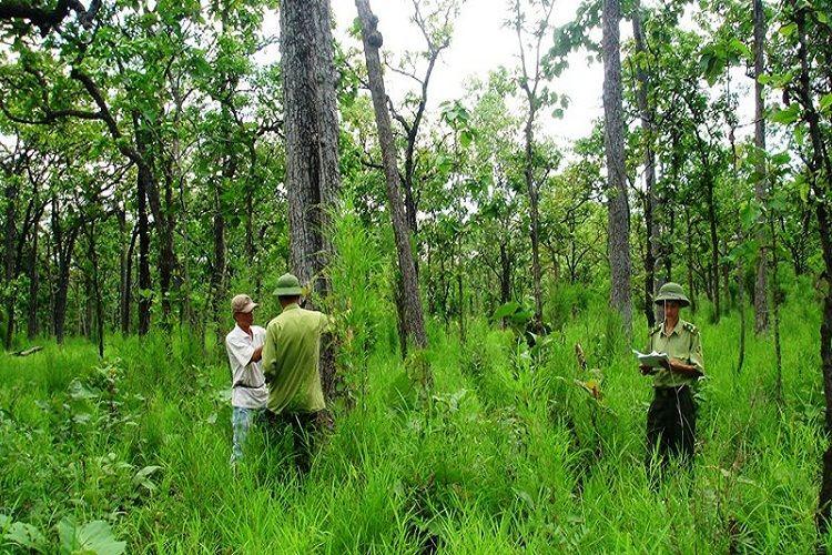 Các trường hợp được phép chuyển nhượng đất rừng phòng hộ