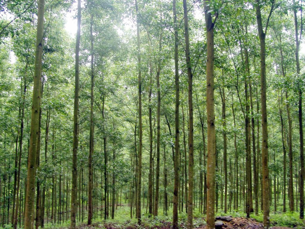 Những lưu ý khi chuyển nhượng đất rừng phòng hộ