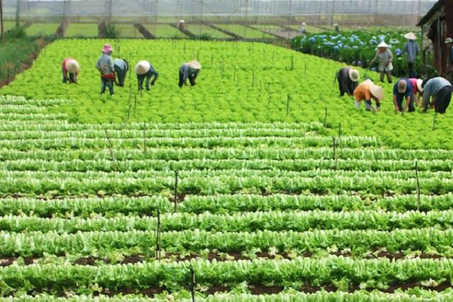 Đất HNK và CLN cũng thuộc loại đất nông nghiệp nhưng khác loại cây trồng
