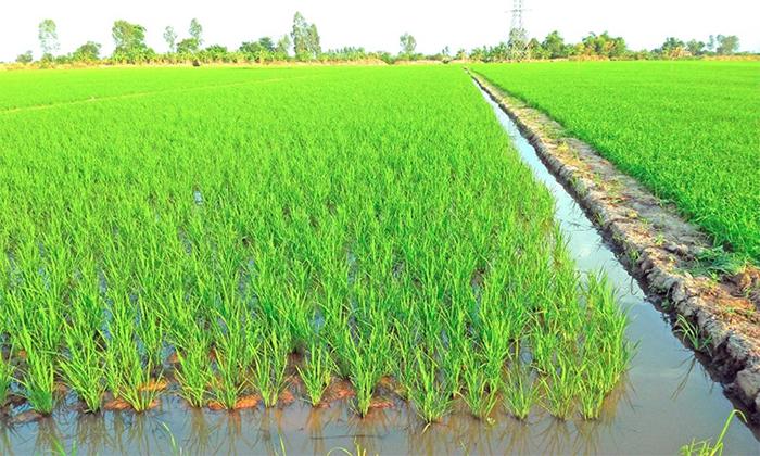 HNK là ký hiệu của đất nông nghiệp trồng cây hàng năm